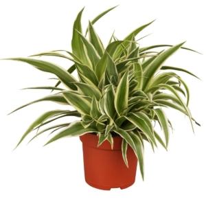 welche pflanzen sind f r das schlafzimmer besonders geeignet. Black Bedroom Furniture Sets. Home Design Ideas