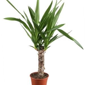 Welche Pflanzen sind für das Schlafzimmer besonders geeignet?